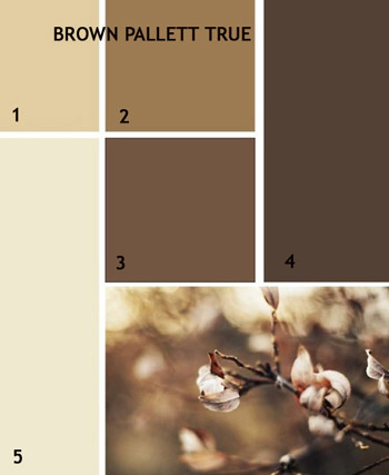 Dyenet pantone pallets for Brown living room color ideas